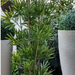 Bamboo Artificial con UV