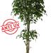 Ficus artificial con y sin UV