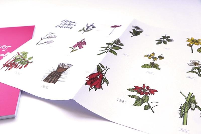 flores chilenas 04.jpg