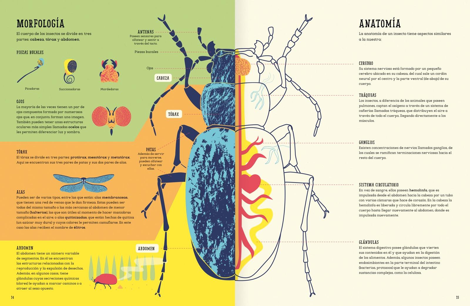 Insectopedia Insectopedia - Amanuta