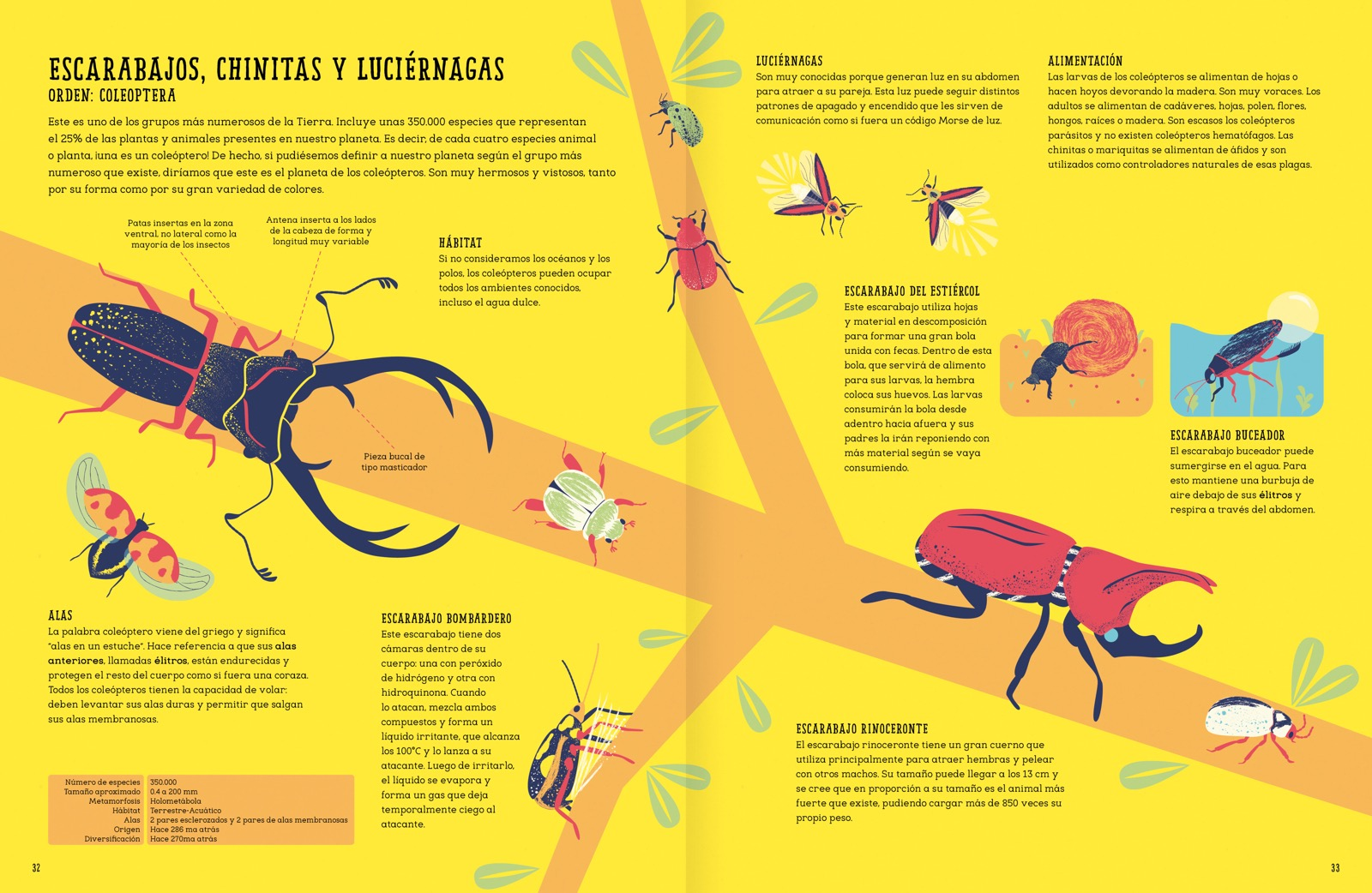 Perfecto Hembra Hoja AnatomÃa Reproductora Festooning - hojas de ...