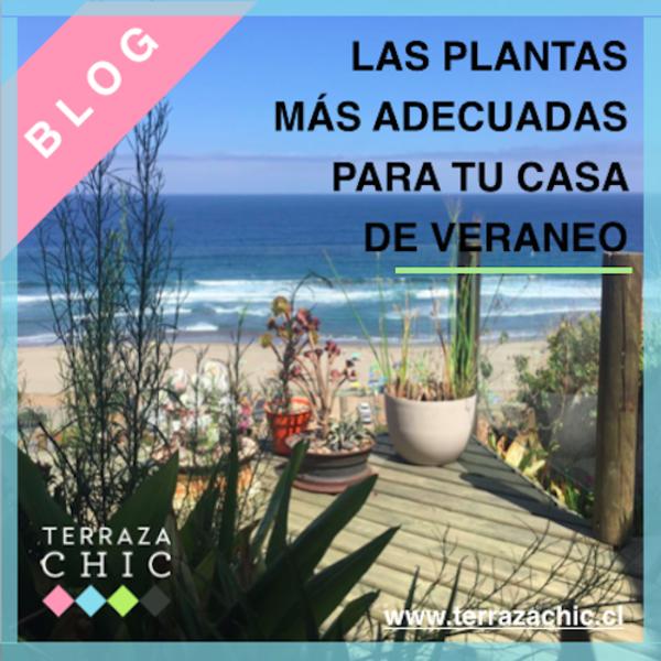 PLANTAS_CASA_DE_VERANEO_BLOG