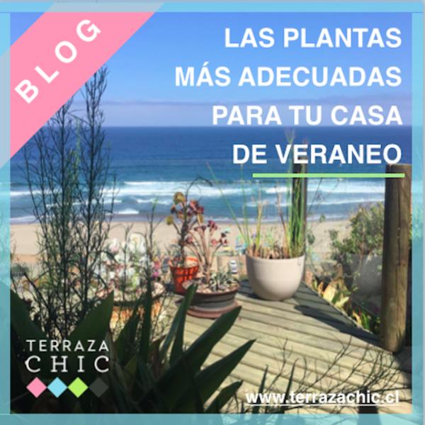 blog_plantas_casa_veraneo