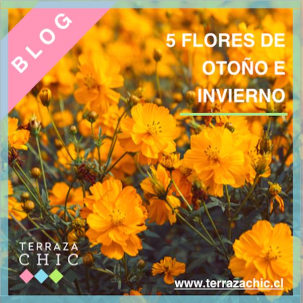FLORES_DE_OTOÑO_E_INVIERNO