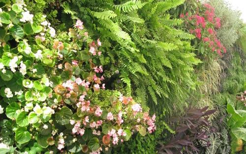como ya saben tenemos dos modelos de jardineras colgantes y verticales ambas de fieltro y de color negro