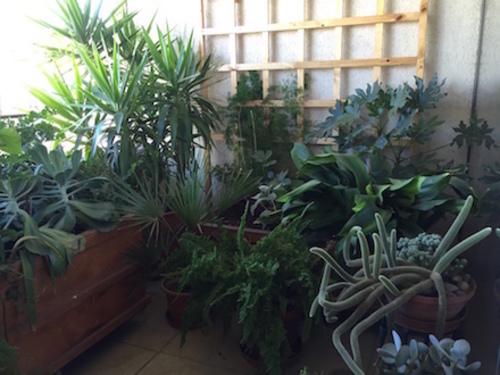 La terraza de karin eisermann asesora de terrazas y for Jardines pequenos sin sol