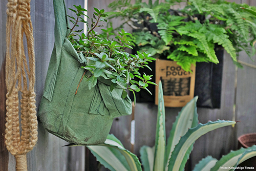Maceta Eco BAG_S