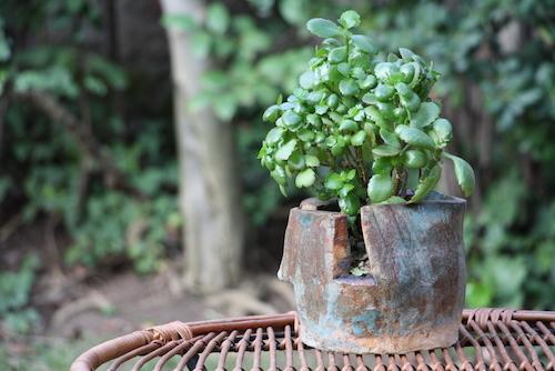Maceta de cerámica de gres con arbolito