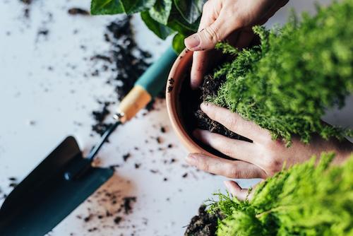 Cuidamos tus plantas cuando no estás