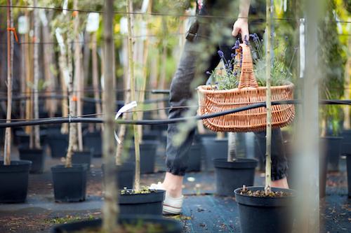 Servicio de jardinería para decoradores
