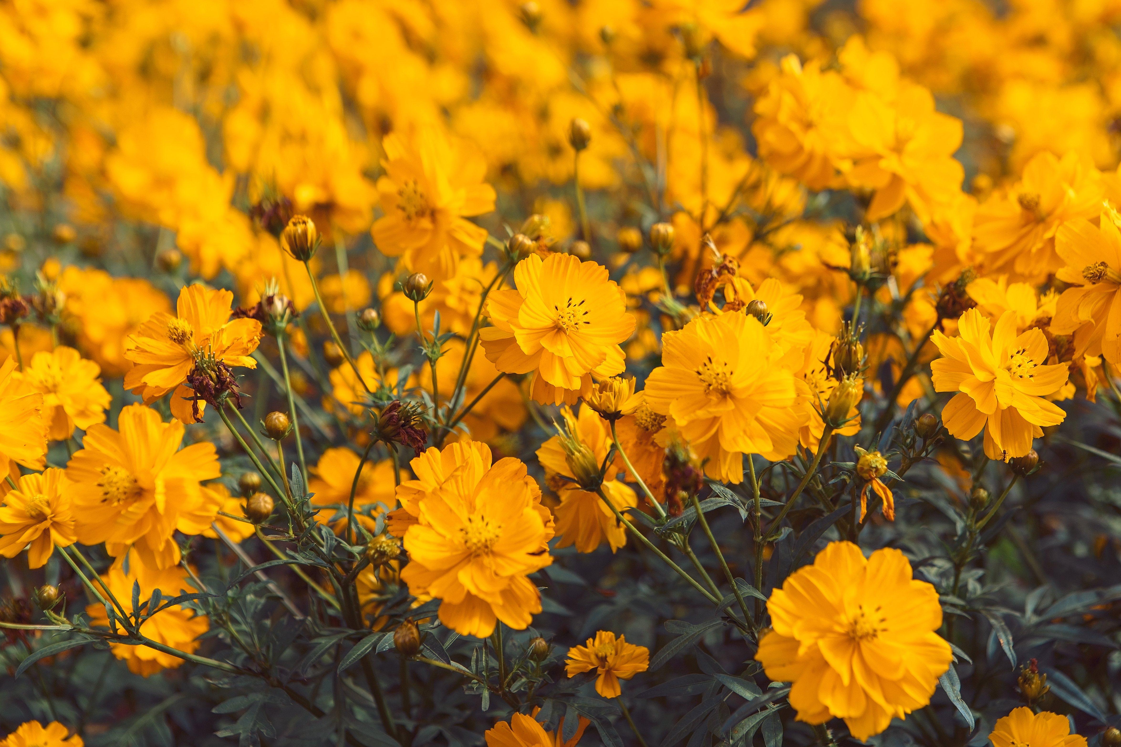 Flores_para_portada.jpg