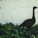 Escultura de fierro de ganso
