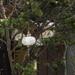 Lámpara turca colgante individual XL
