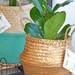Canasto de fibra con planta de interior L