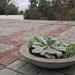 Plato de cemento con suculentas