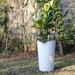 Ficus Lyrata con macetero autorregante Florencia