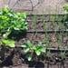Taller personalizado para crear y mantener tu huerto orgánico - riego de huerto.jpg
