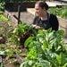 Taller personalizado para crear y mantener tu huerto orgánico - cosecha y huerto.jpg