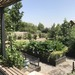 Taller online  inicial sobre huertos orgánicos - vista huertos organicos.jpg