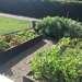 Mantención de huertos domésticos - huertos en el suelo terminados.jpg