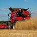 NEUMATICO AGRICOLA BKT 650/75R32 MOD. TERIS AGRICOLA-TRACCION TL