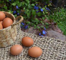 Los canastos son ideales siempre: como adorno o para guardar los huevitos en la cocina
