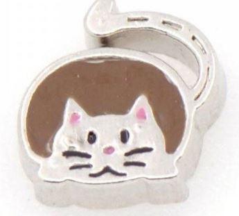 Gato Marrón