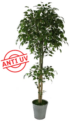 Ficus artificial con y sin UV