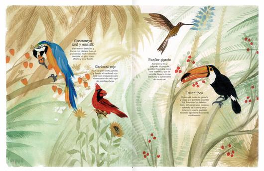 Vuelo de pájaros americanos