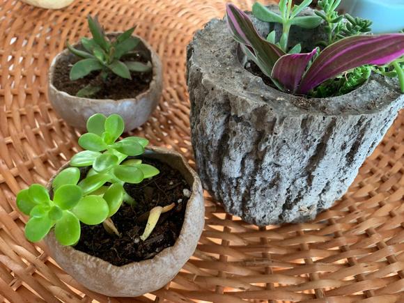 Cuenco de cerámica de gres con suculenta