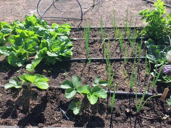 Taller personalizado para crear y mantener tu huerto orgánico