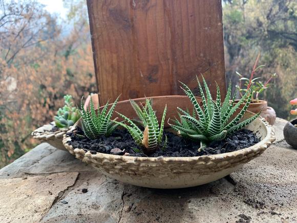 Macetero de cerámica de gres colgante con suculentas