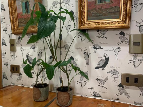 Macetero de cerámica de gres con planta de interior