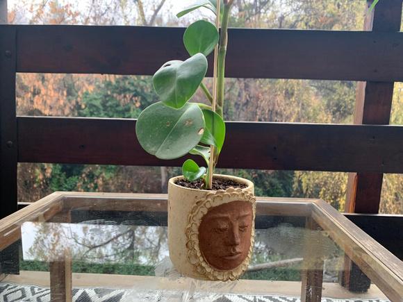 Macetero de cerámica de gres con planta