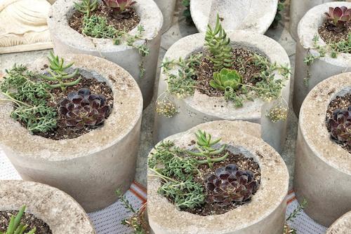Macetero de hormigón cilíndrico de 20 cm con planta - macetero hormigon cinlindrico con suculenta.jpg