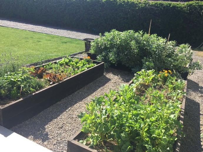 Taller online  inicial sobre huertos orgánicos - huertos en el suelo terminados.jpg