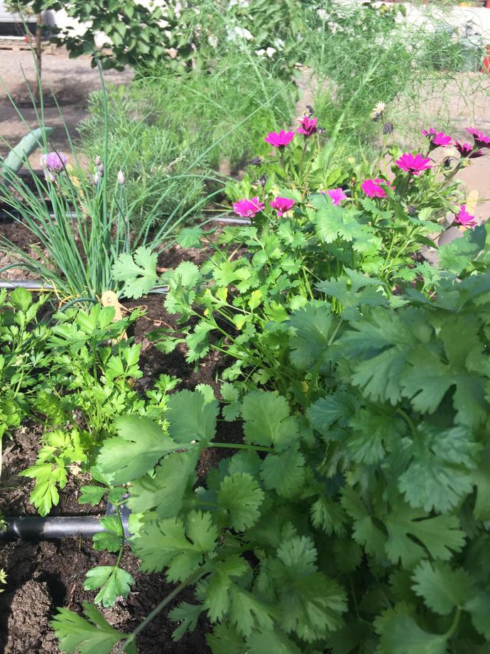 Mantención de huertos domésticos - flores para no usar fertilizantes.jpg