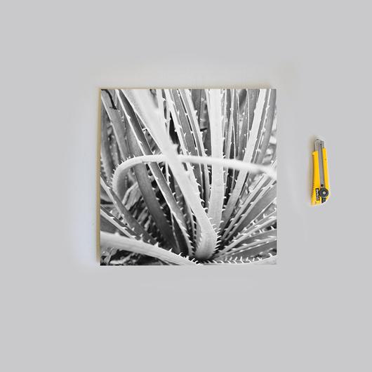 2 Ampliaciones 30x30 SOLO papel fotográfico