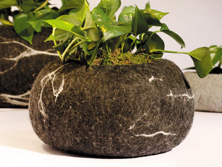Rocking Plant