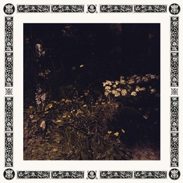Pale Bloom