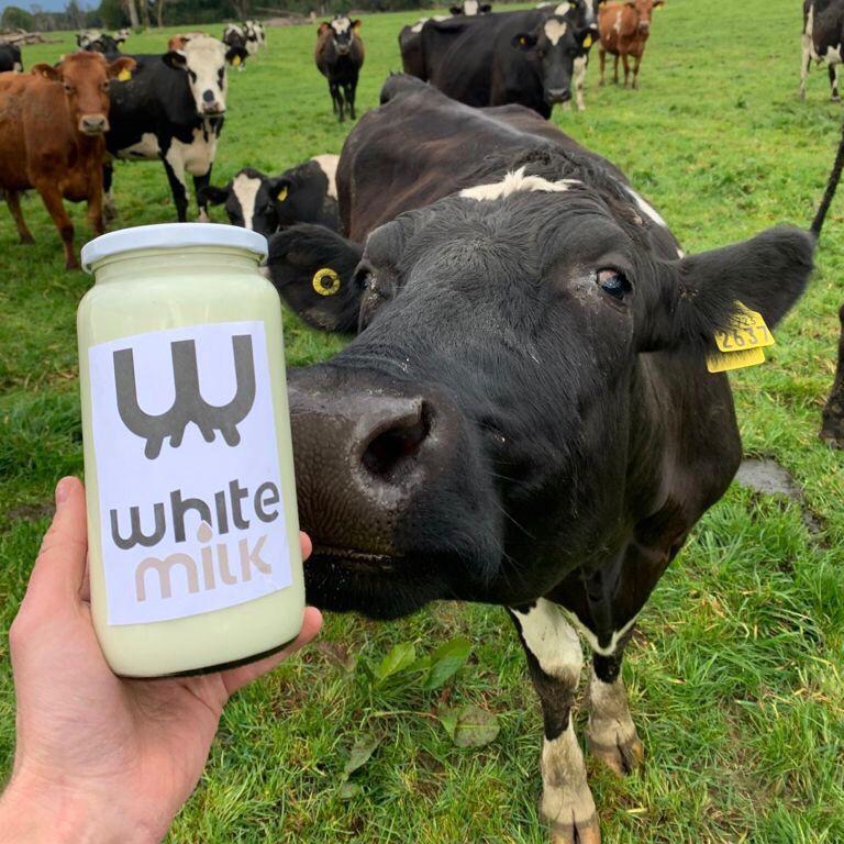 Yogurt Natural 1L