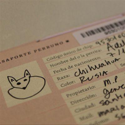 Pasaporte perruno